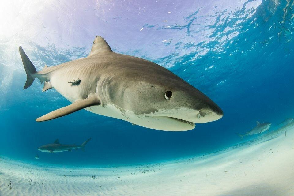 был все про акул фото обыска институте