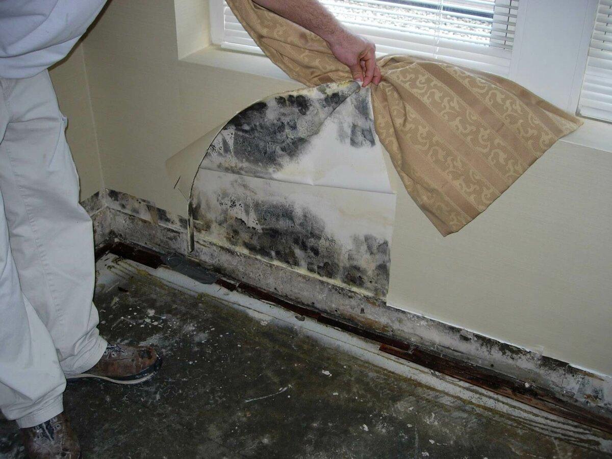 как избавиться от запаха сырости на даче