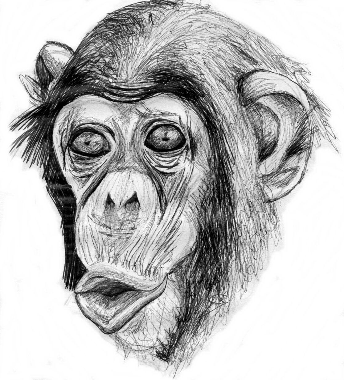 картинки обезьян нарисовать