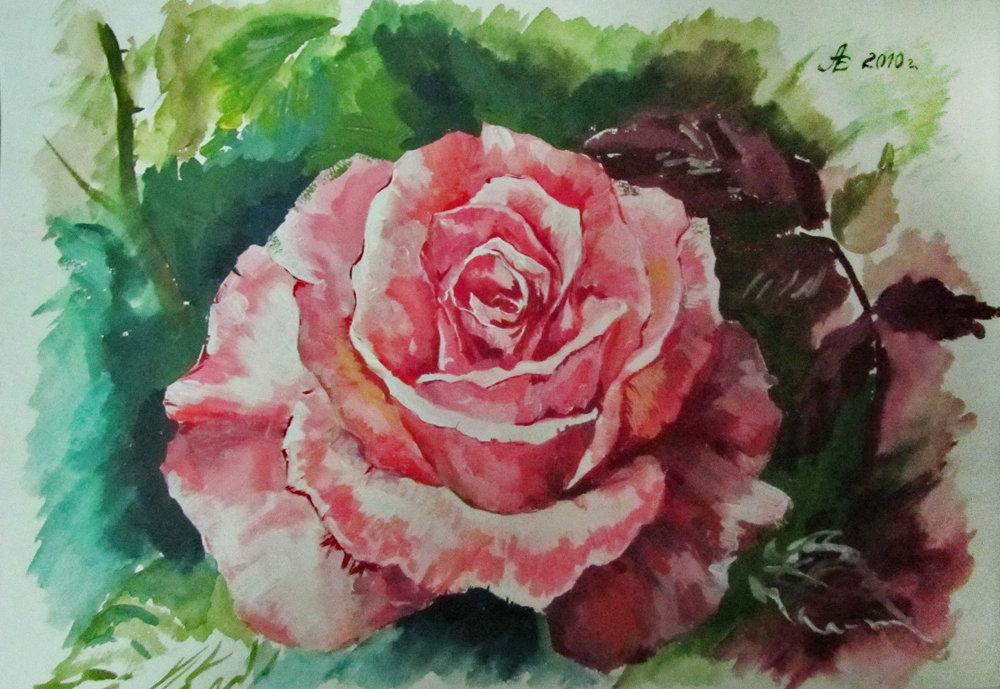 сим рисунок розы гуашью картинки проживания туристы