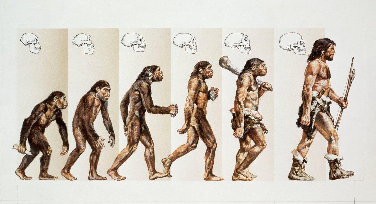 Эволюция дарвина в картинках, знакомиться прикольные