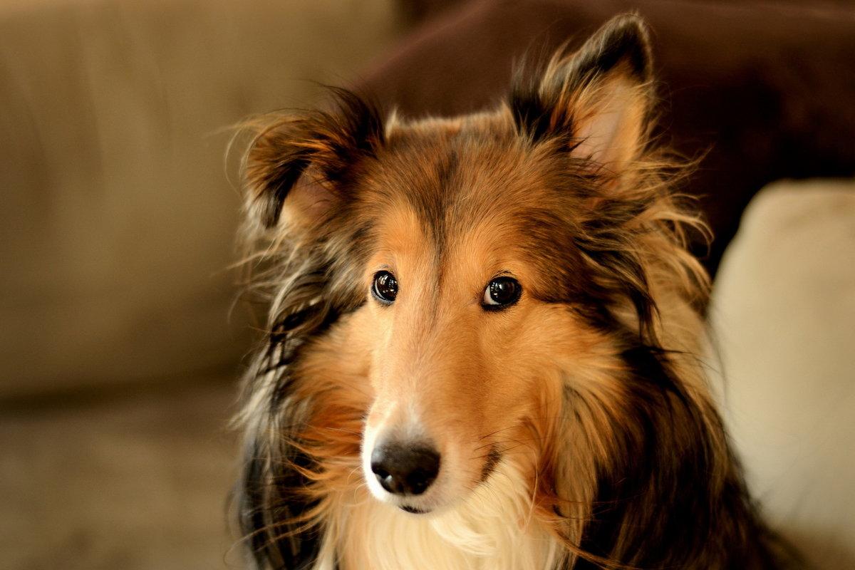 Собаки картинки фотографии