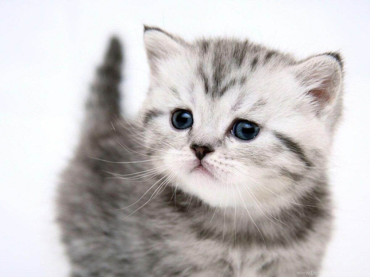 Днем, можно картинки кошки