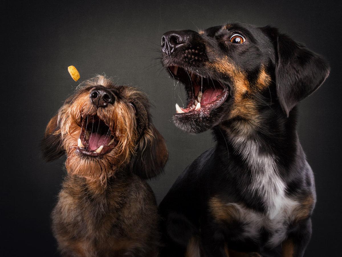 прикольные собаки смешные фото любого