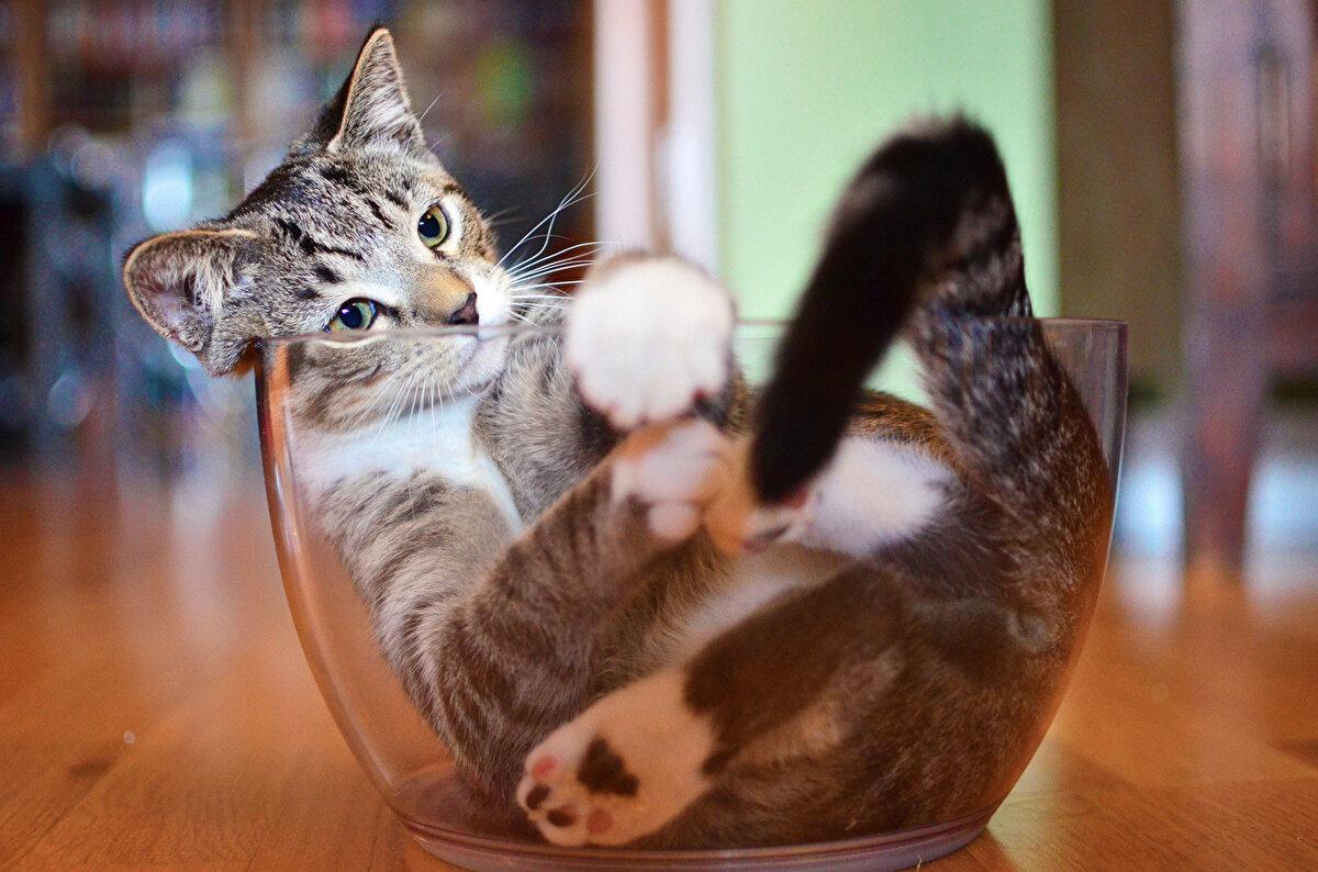 Картинки прикольные кошки коты и котята