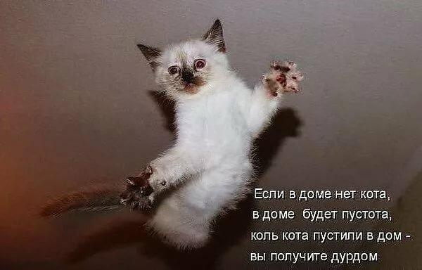 Смешные стихи про кошек в картинках, пожеланием хорошего дня