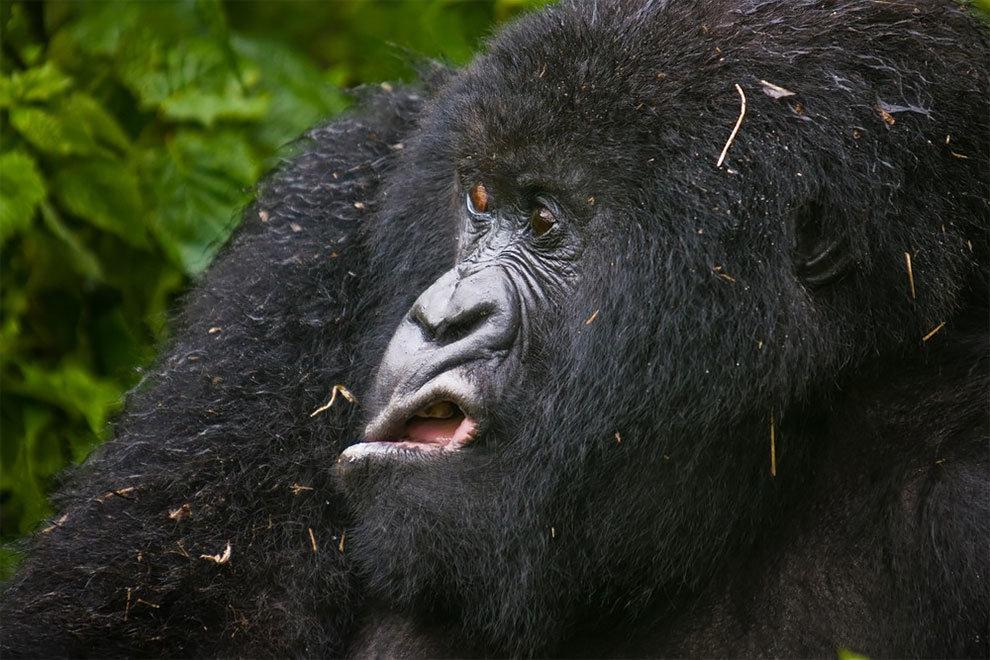 Фото, последние смешные картинки с животными