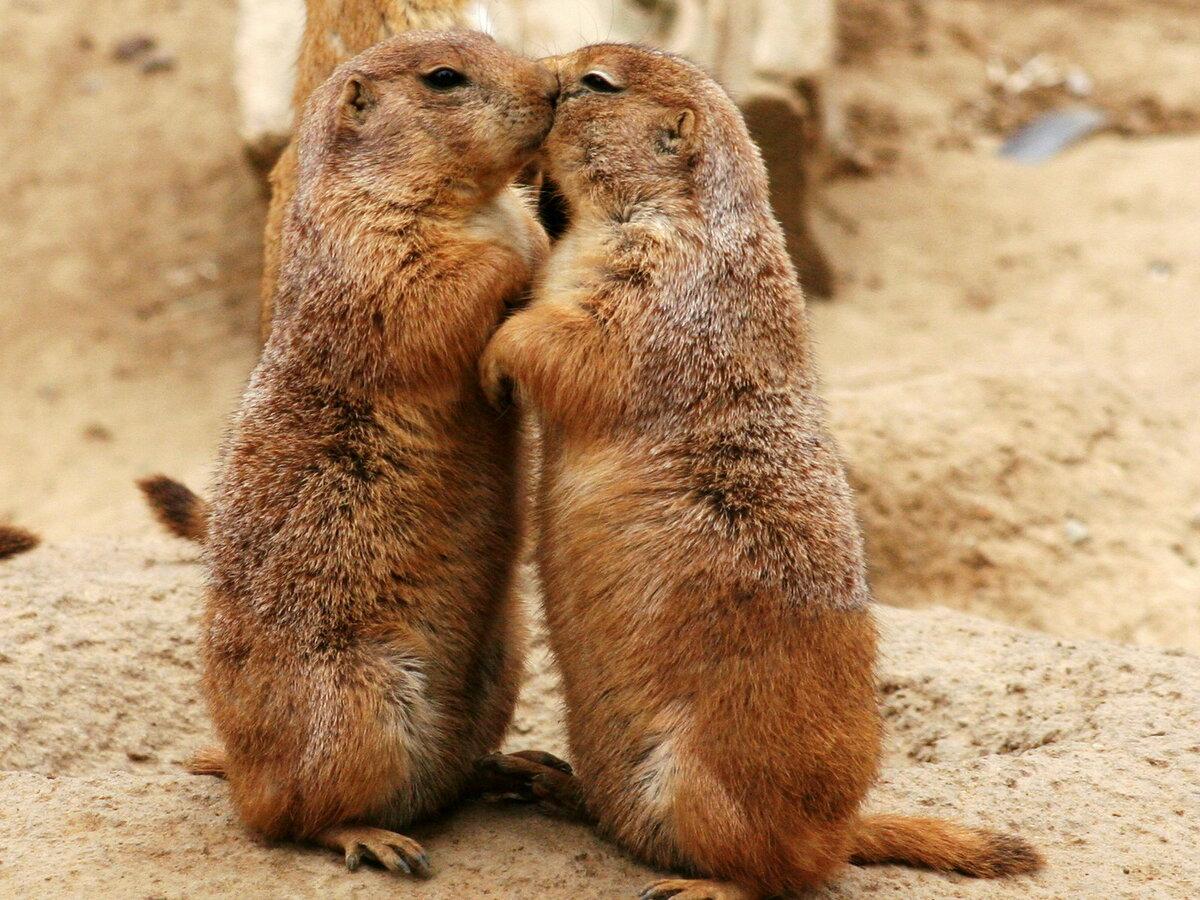 Днем рождения, влюбленные животные прикольные картинки
