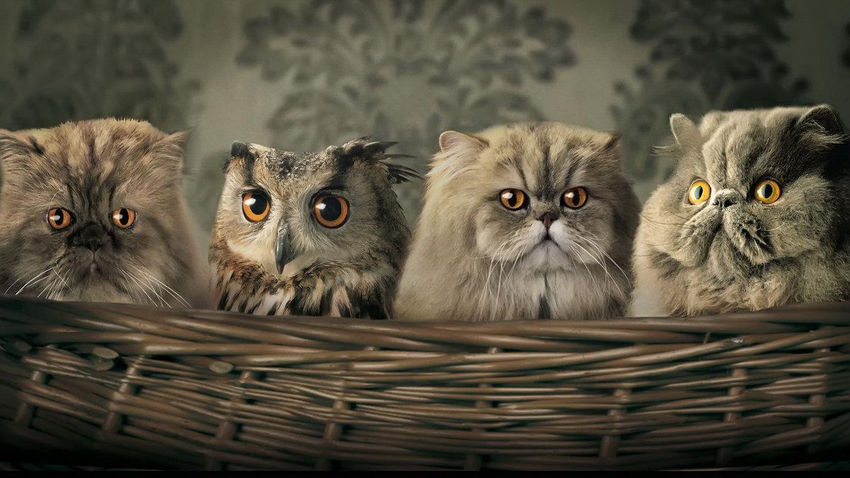 Смешные, картинки смешные кошки огромные на весь экран