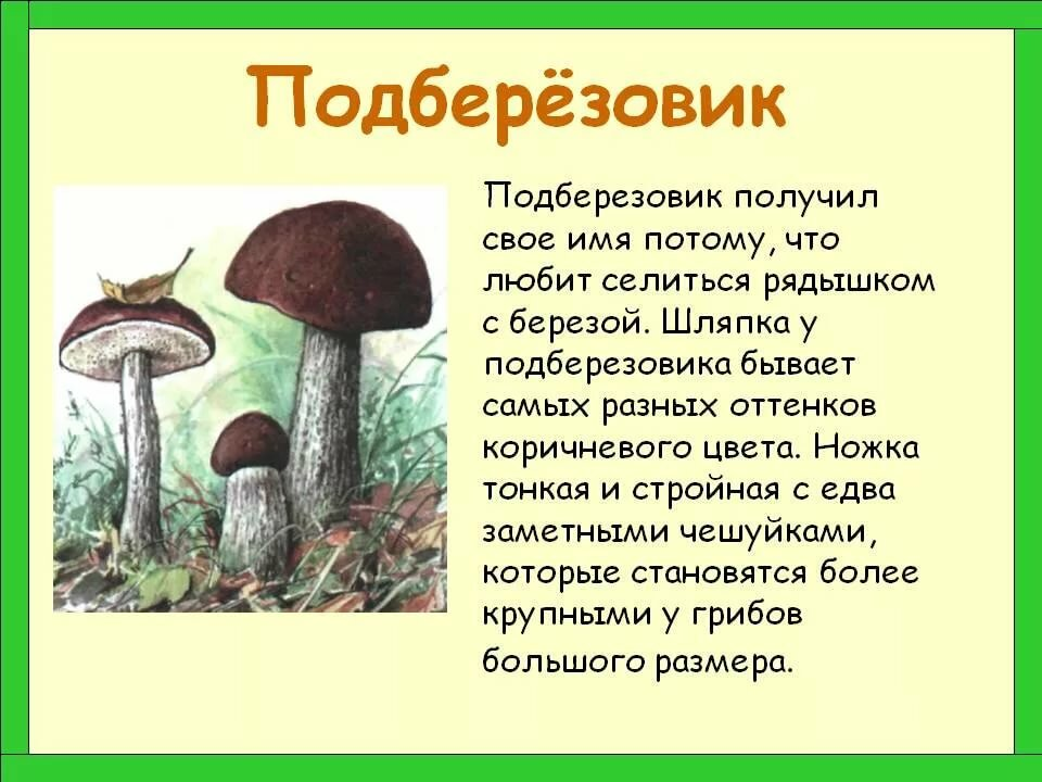 Картинки грибы и текст про них