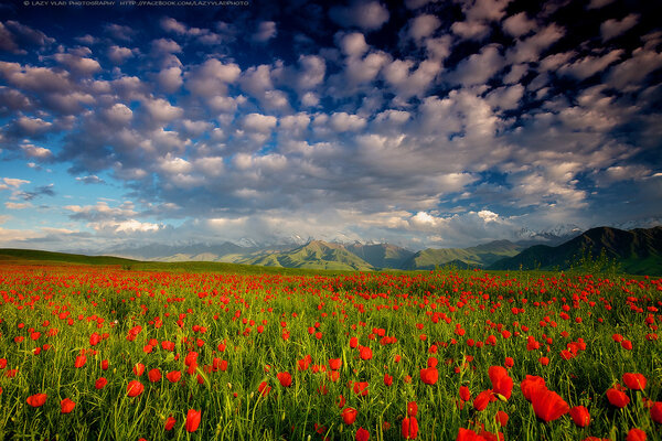 природа киргизии фото
