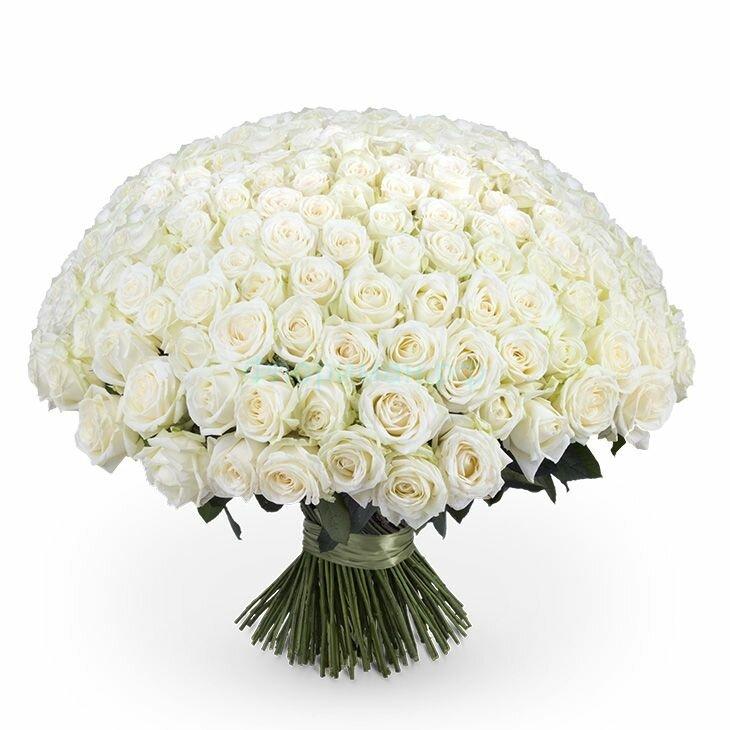 Букет из белых роз картинка