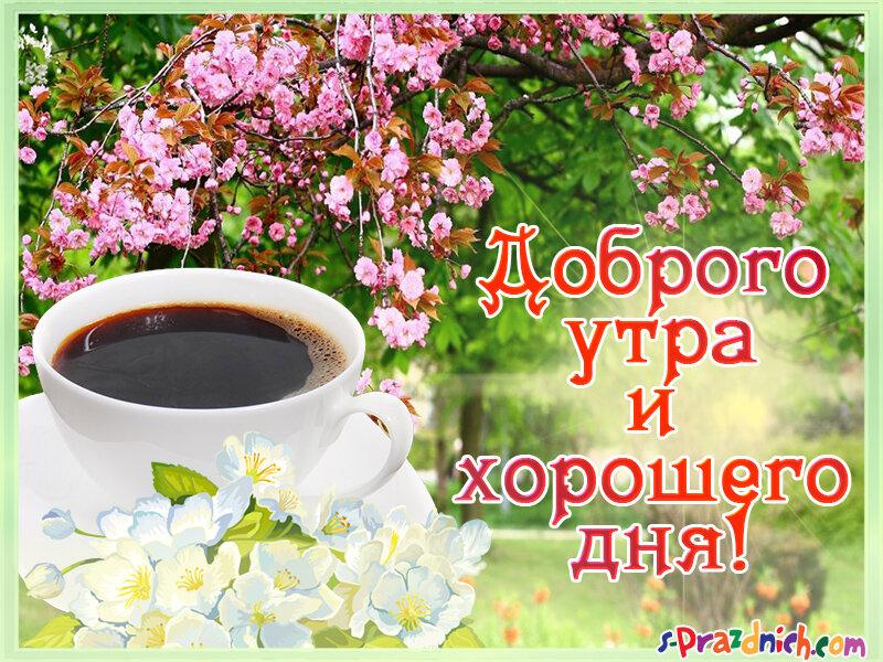 Открытка с добрым утром хорошего дня