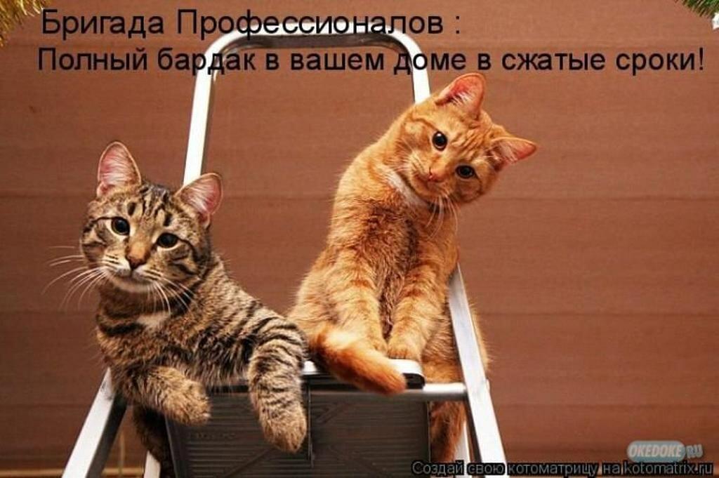 Смешные рисунки про кошек с надписями, жены картинки