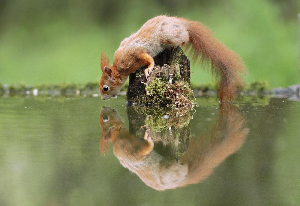 Салли, прикольные фото и картинки природы