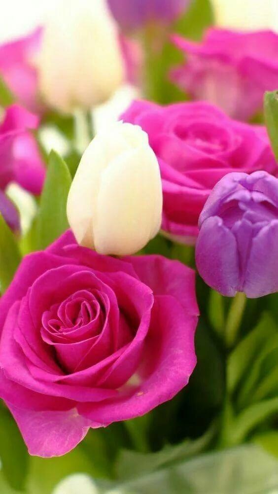 картинки для самсунга с цветами утверждают, что