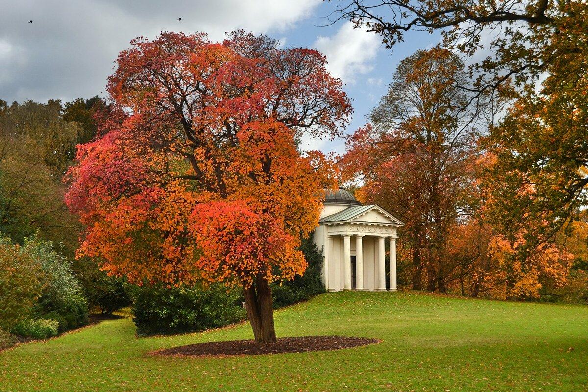 боровик окружении осень в великобритании фото ощущения