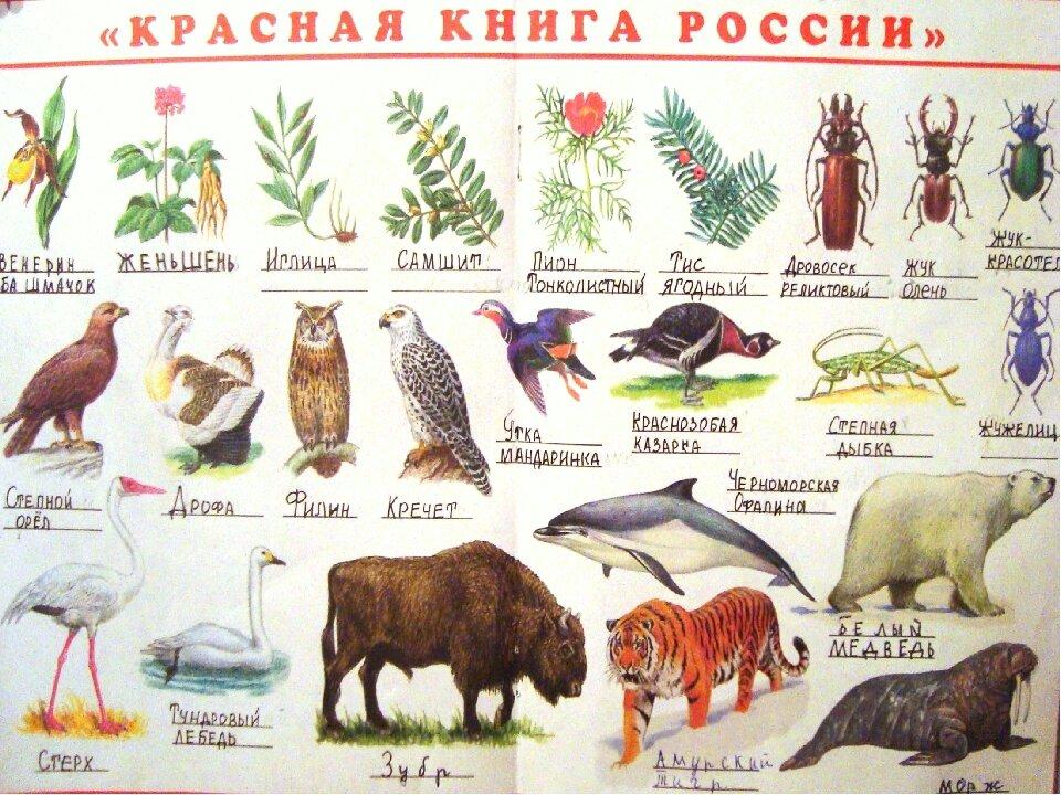 картинки из красной книги животные и растения россии желанию можно пришить