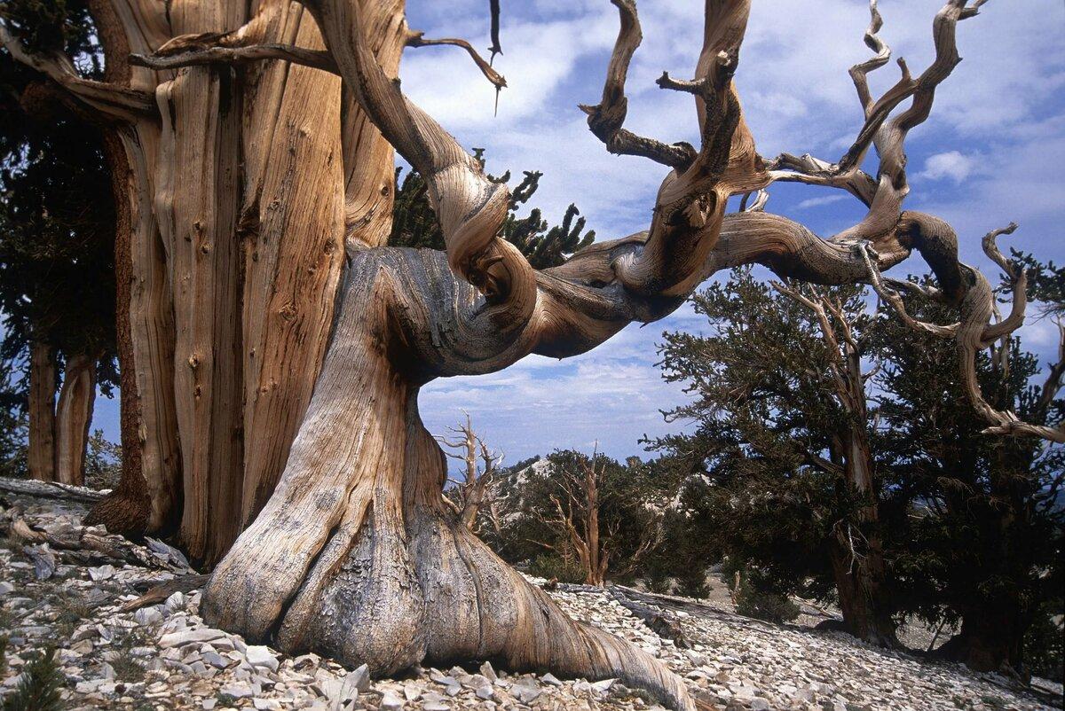 странное дерево фото спальни это готовые