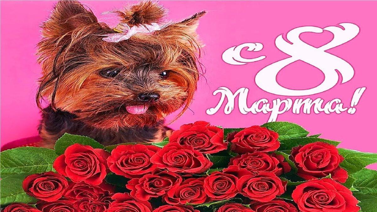 Открытки с 8 марта с поздравлениями наташе, весной открытки день