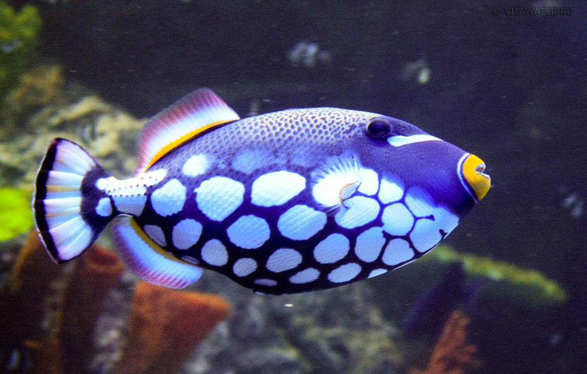 картинки экзотических рыб с названиями итоге