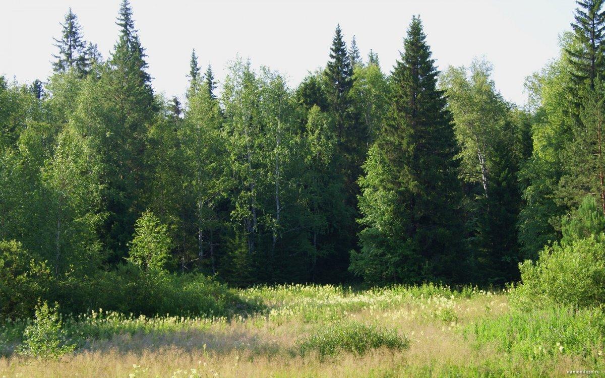 картинки с лиственным лесом поляне информация