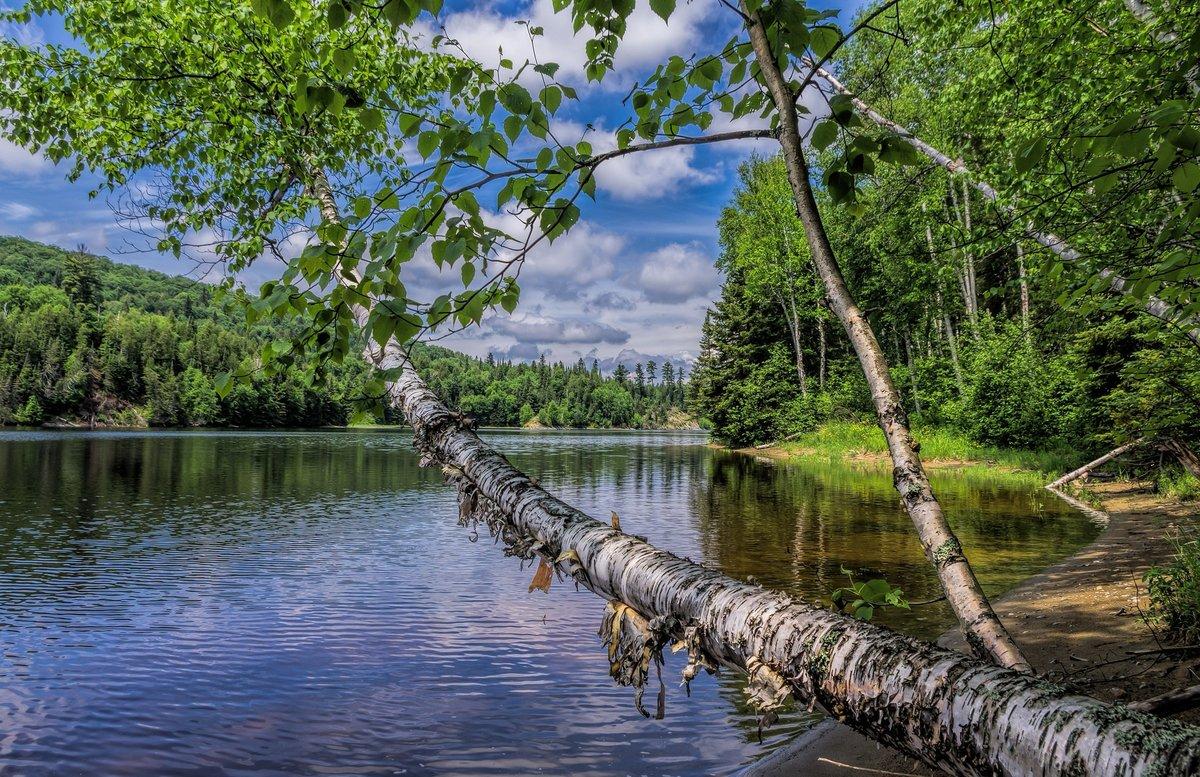 Лета река картинки