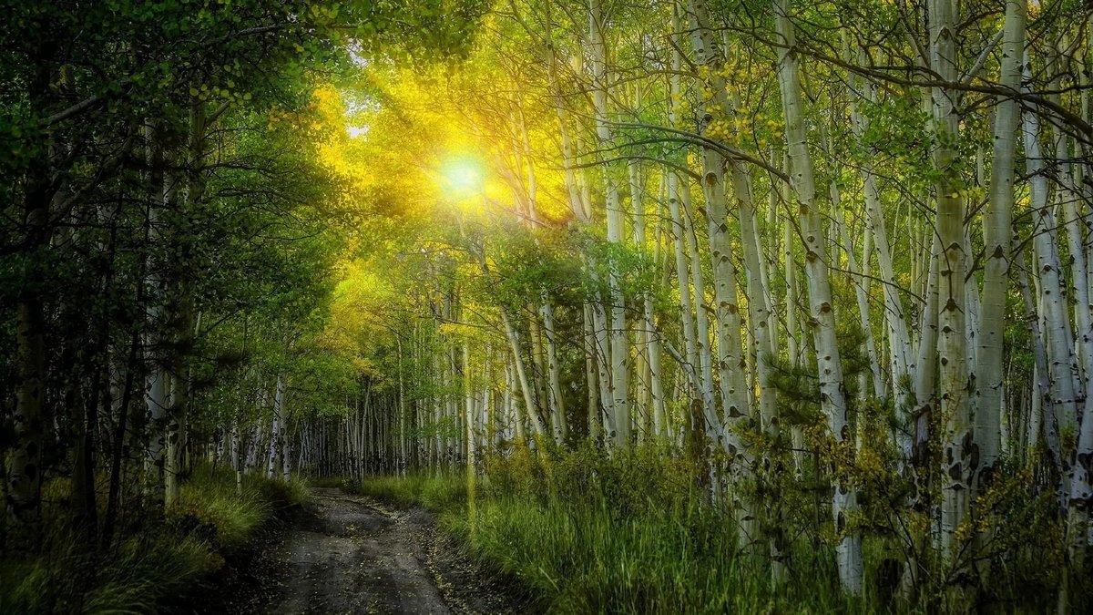 красочные фотообои утро в весеннем лесу сбрызнем лаком