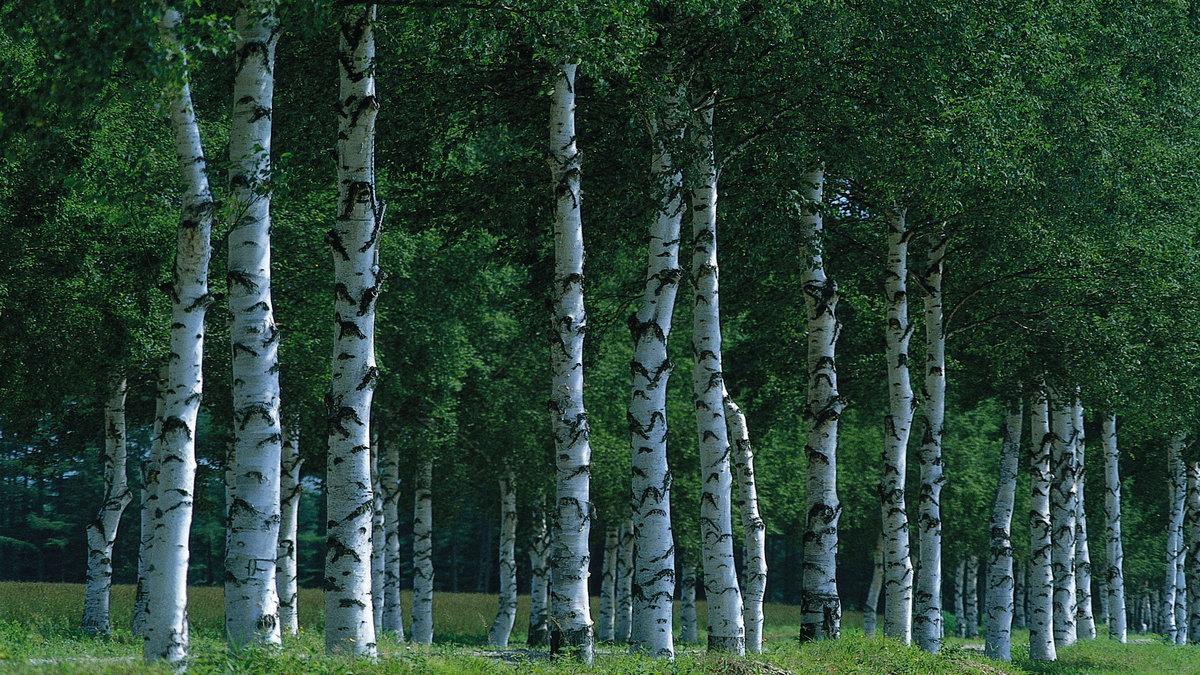 Фото русских лесов в хорошем качестве