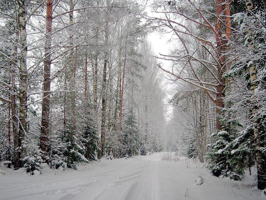 Картинки зимнего леса анимации