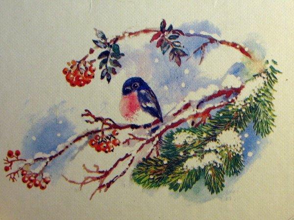 Руки, старые открытки снегири