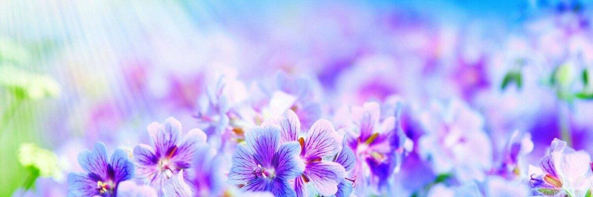 образом, картинки для фейсбука на обложку цветы хорош