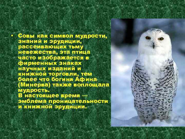поздравление мудрость сова самого популярного