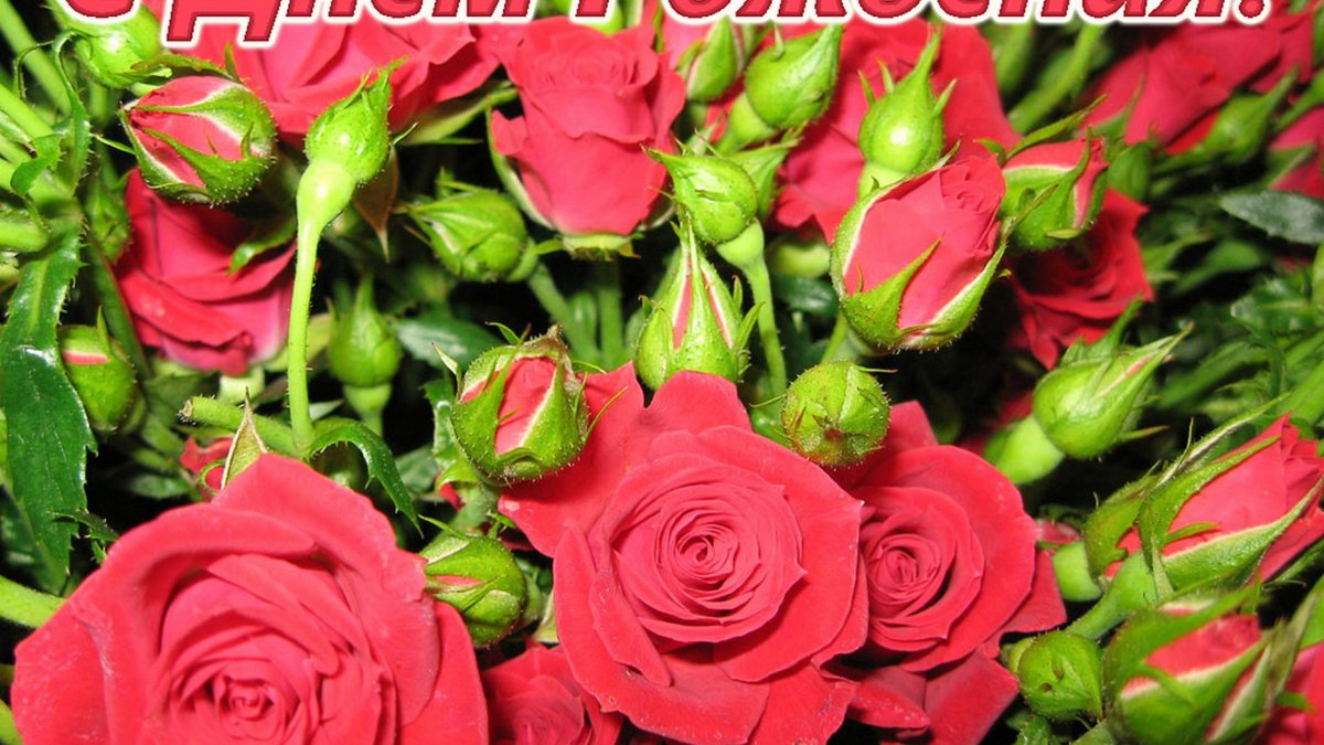 Скучаю тебе, открытки цветы с днем рождения прикольные