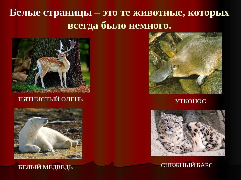 мужчины картинки из красной книги животные и растения россии того, садовода есть