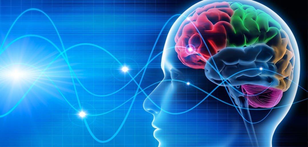 картинки офисов и работы мозга