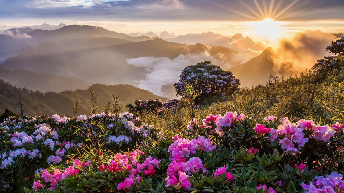 Доброе утро картинки с природой красивые необычные, картинках