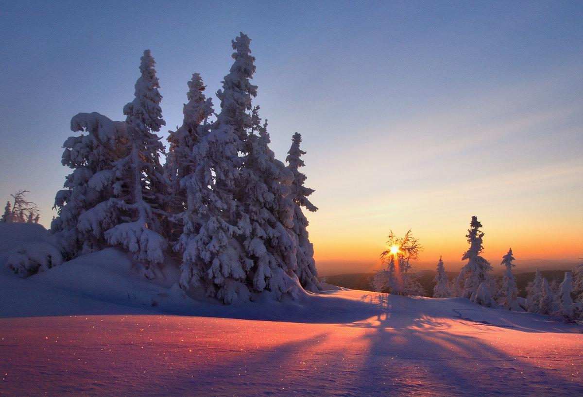 мистера картинки зимний снежный коми лес рун магическим образом