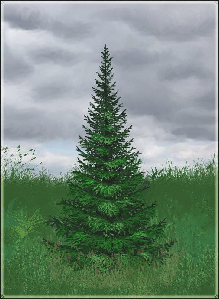 Елки лес рисунок