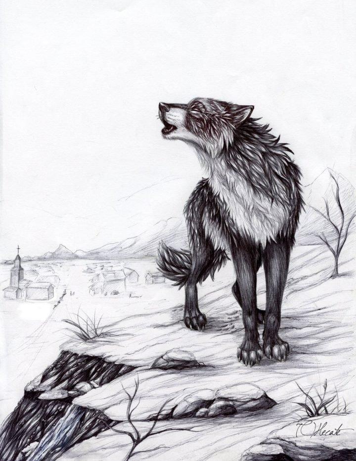 Картинка нарисованного волка простым карандашом