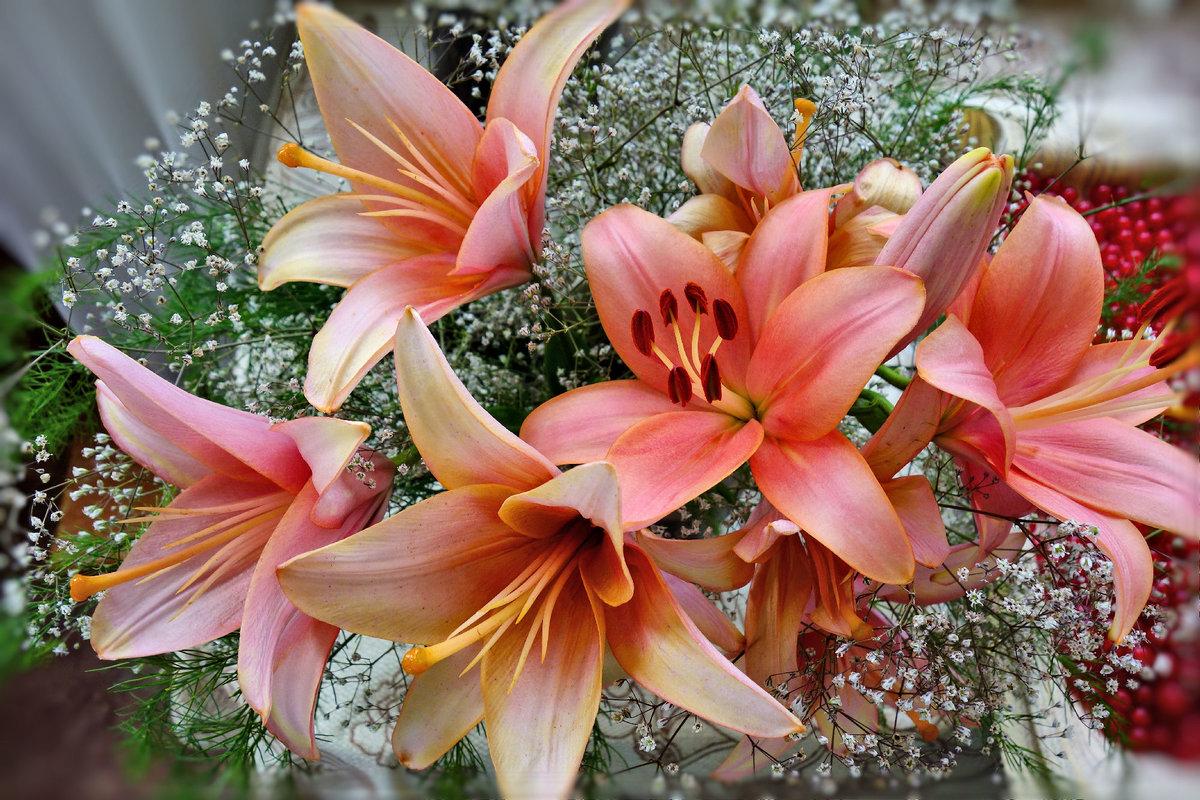 картинки лилий с блестками цветные фотографии побольше