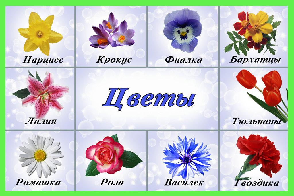 Цветы картинки садовые с названием
