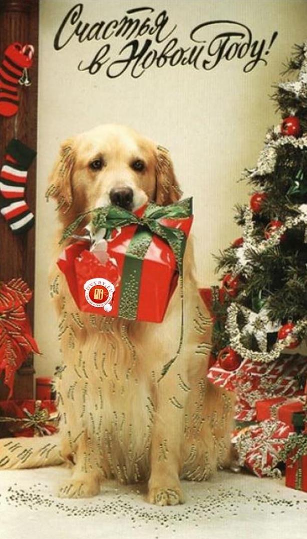 Днем, открытка с новым годом собаки