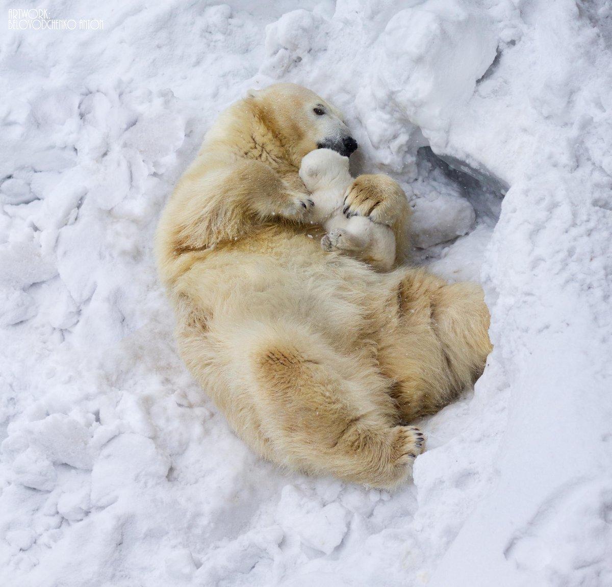 Картинки зима животные любовь
