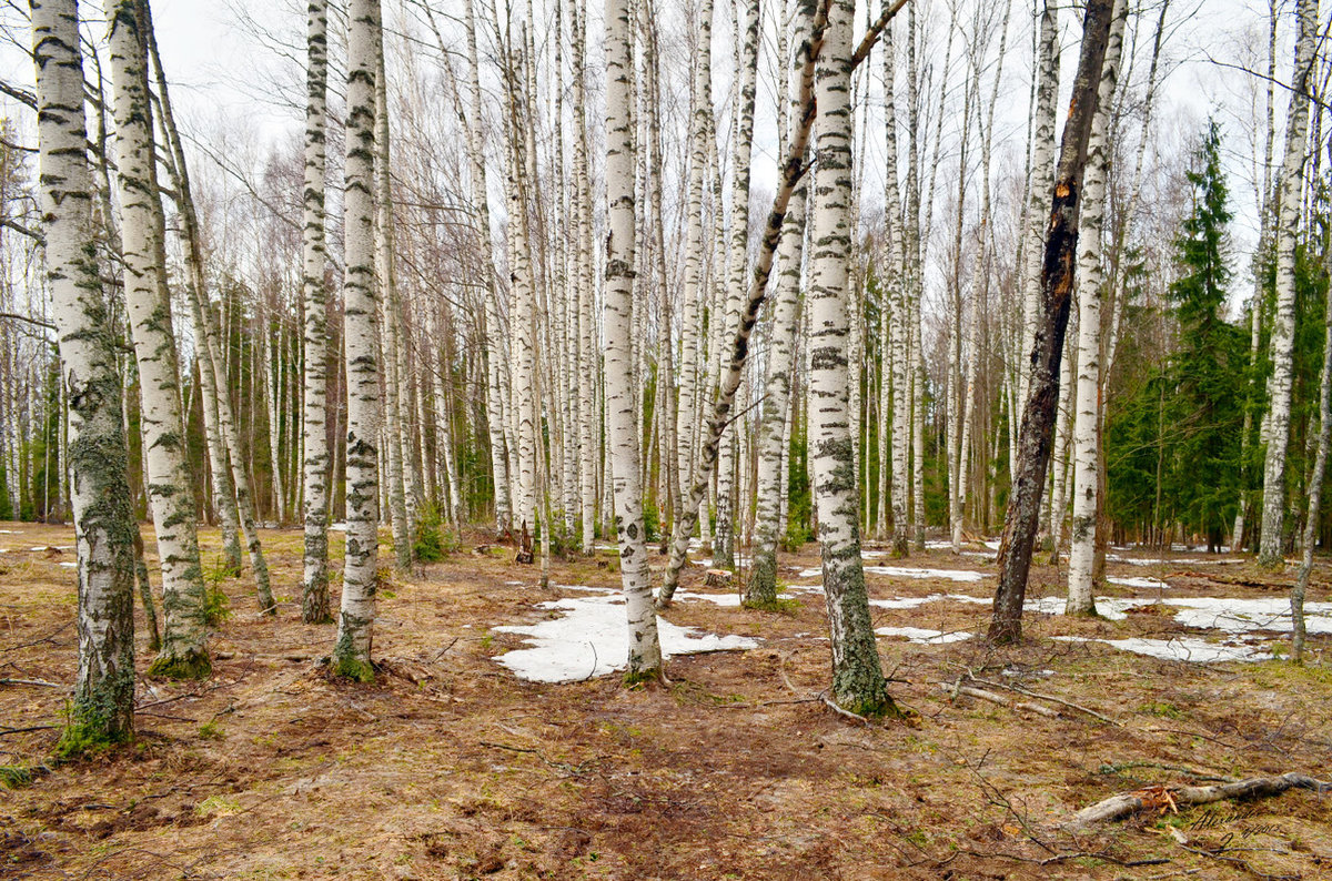 Картинка природа россии весной, открытки летни