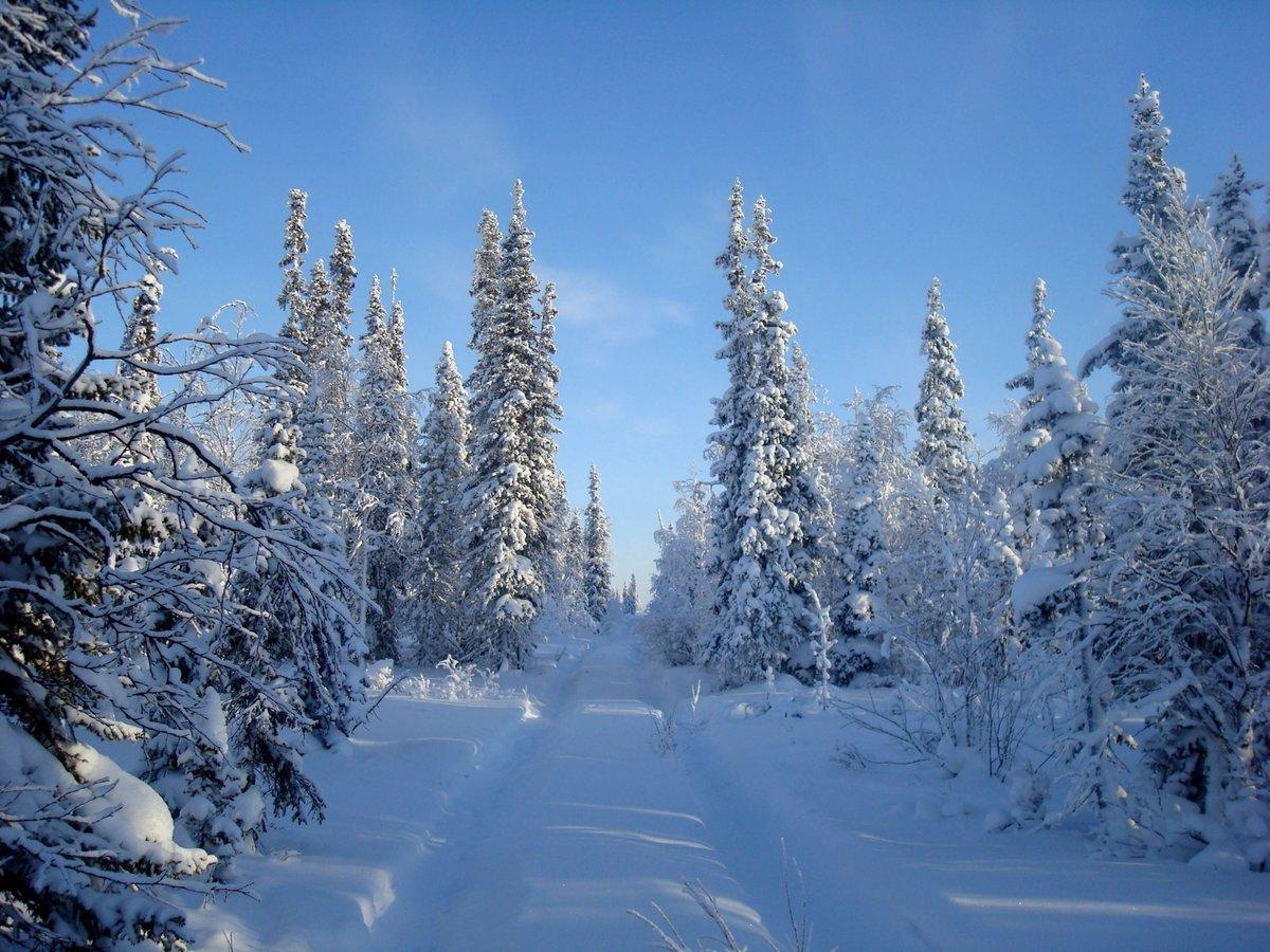 Зимняя картинка красивая