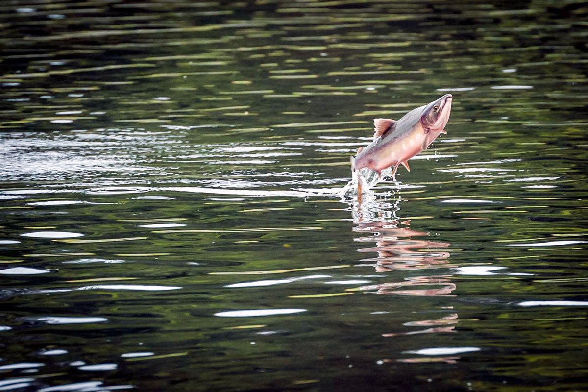 Картинки с рыбой на речке