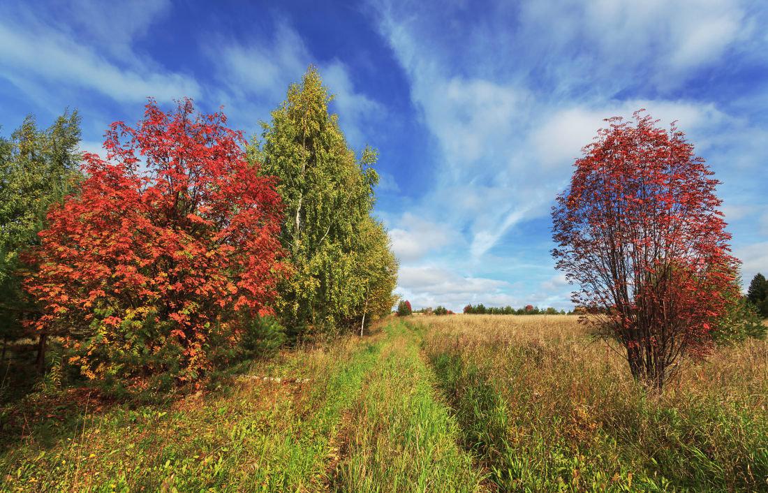 картинка наступила золотая осень может