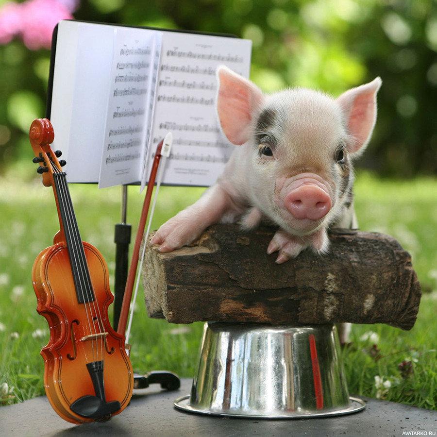 Картинка прикол год свиньи, приглашения день учителя