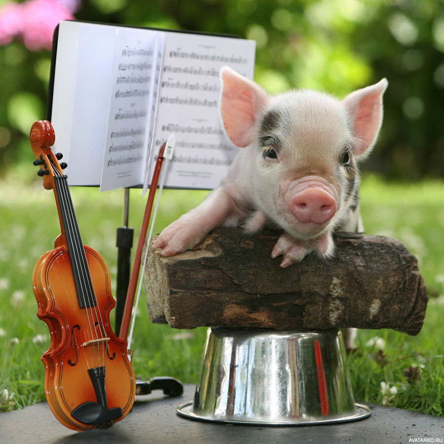 Картинки смешных свинюшек
